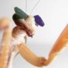 Des lunettes 3D pour insectes !