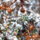 Escovopsis : Parasitism in mushroomists ants