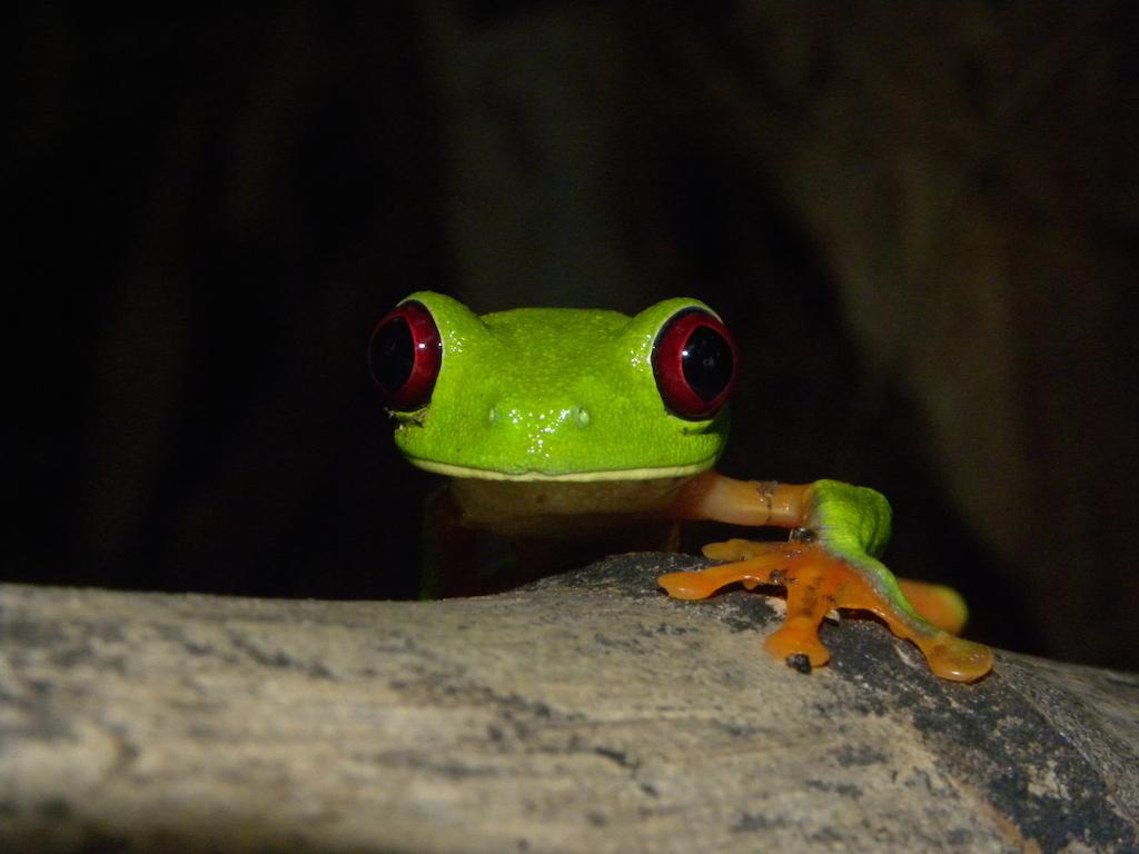 Wildlife & Flora – Panama