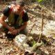 Faune et Flore en montagne et marais de Kaw (Guyane Française)