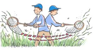 Utilisation du filet fauchoir (Illustration de Jacques Goldstyn - Insectarium de Montréal)