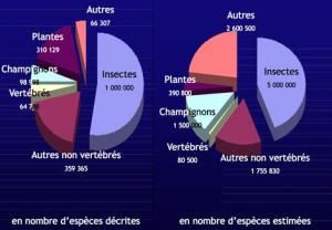 Nombre d'espèces de différents groupes d'organismes (Source : http://education.francetv.fr)