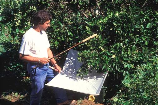 différents insectes dans le compost