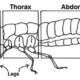 Qu'est ce qu'un insecte? Définition