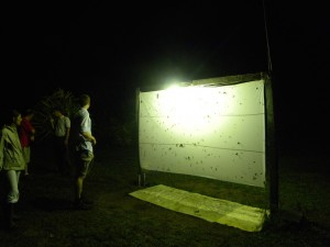 Night hunting - French Guiana photo album (Source : Photo B. GILLES)