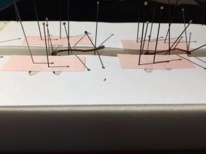 Etalage d'Odonates (Demoiselles), les ailes maintenues par des languettes de papier et des aiguilles - ©Photo B. GILLES