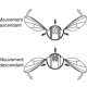 Insect flight: aerodynamics, musculature and 2/2-way control system