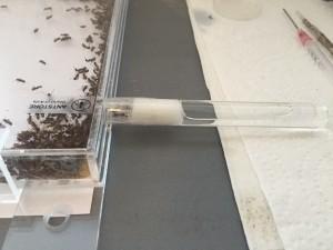 Photo 10 : Système d'humidification constitué d'un tube à essai obstrué par du coton et inséré dans la seconde ouverture du nid