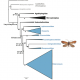 Revision of lepidopteran (butterfly) phylogeny
