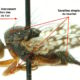 Sensory receptors in insects: mechanoreceptors – Part 1: cuticular mechanoreceptors