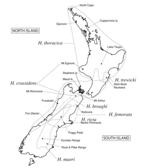 Carte 1 : Distribution des espèces du genre Hemideina