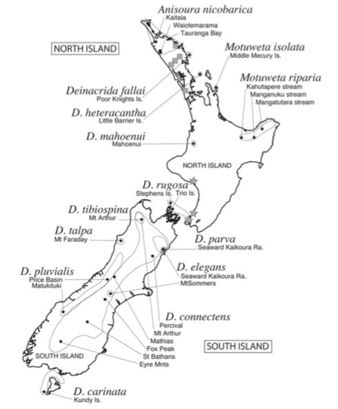 Carte 2 : Distribution des espèces du genre Deinacrida, Anisoura et Motuweta (Source :