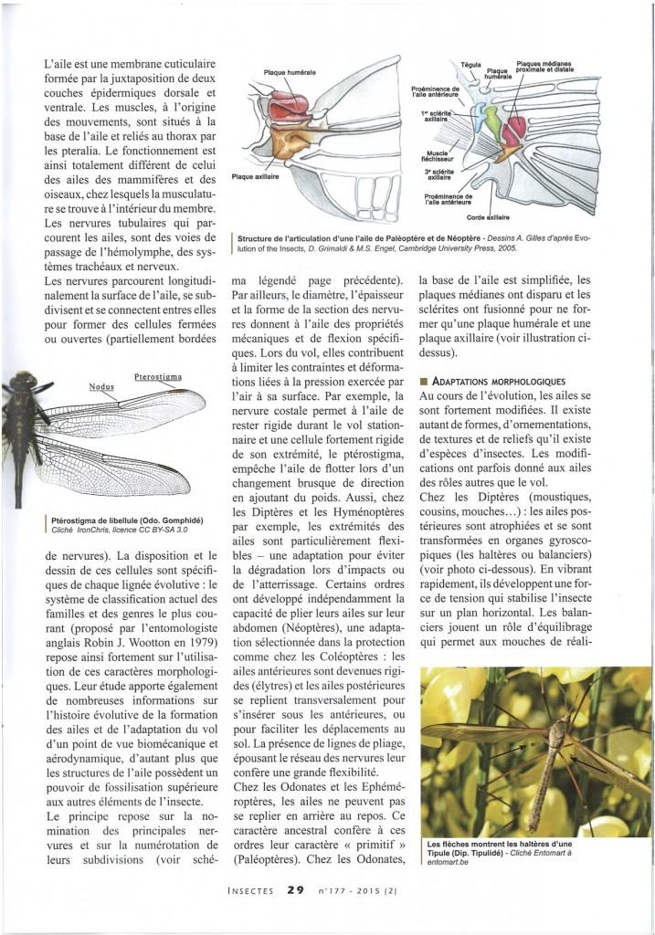 Le vol des insectes 1:2.4