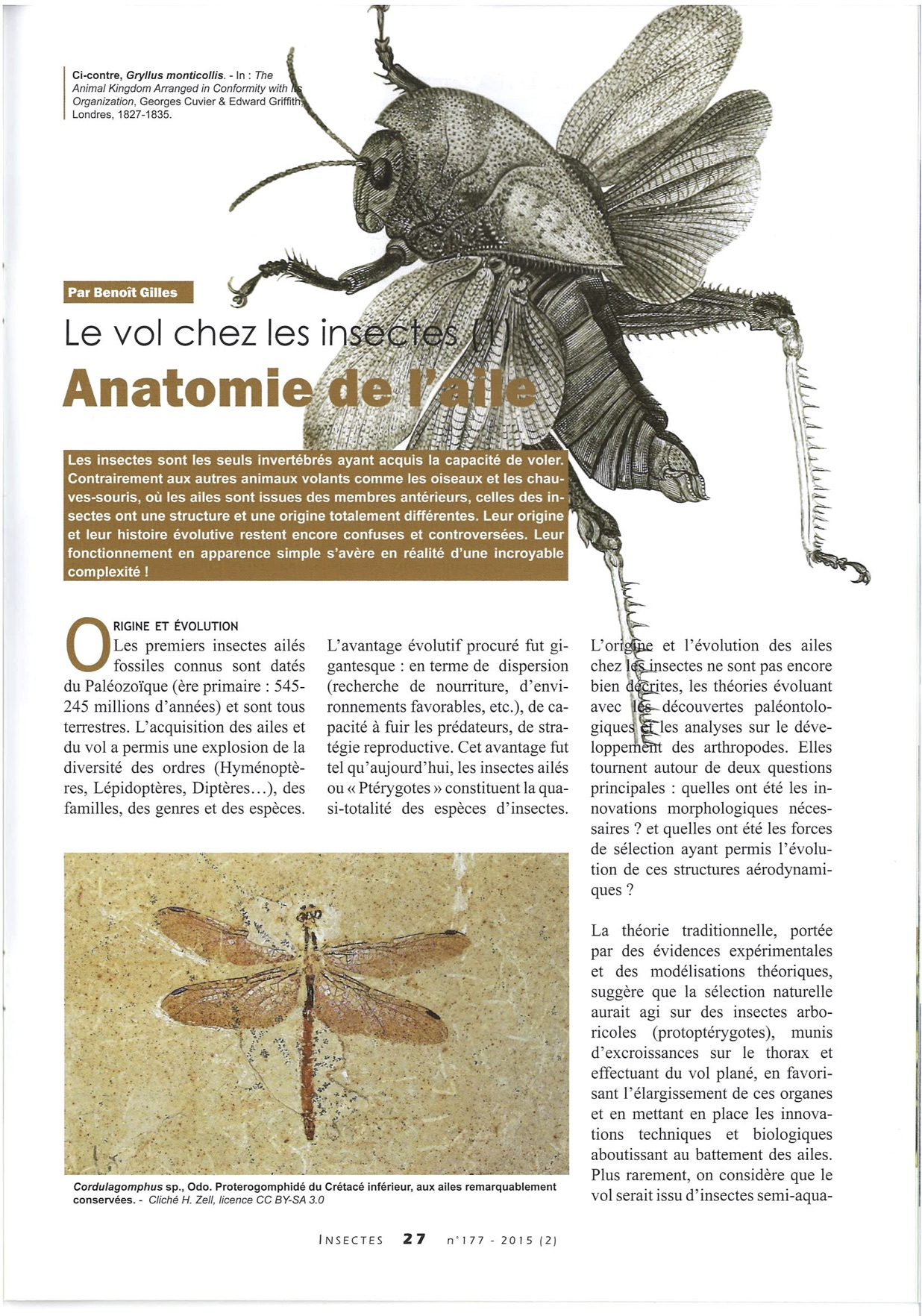 Publication in the journal Insectes – July 2015 – n°177