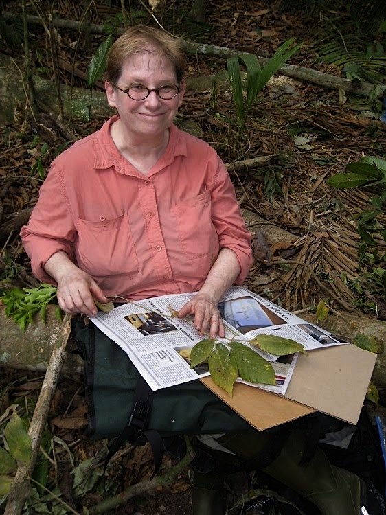 Amy Berkov during a tropical forest mission in Panama (Source : Chris Roddick's photo - University of New York)