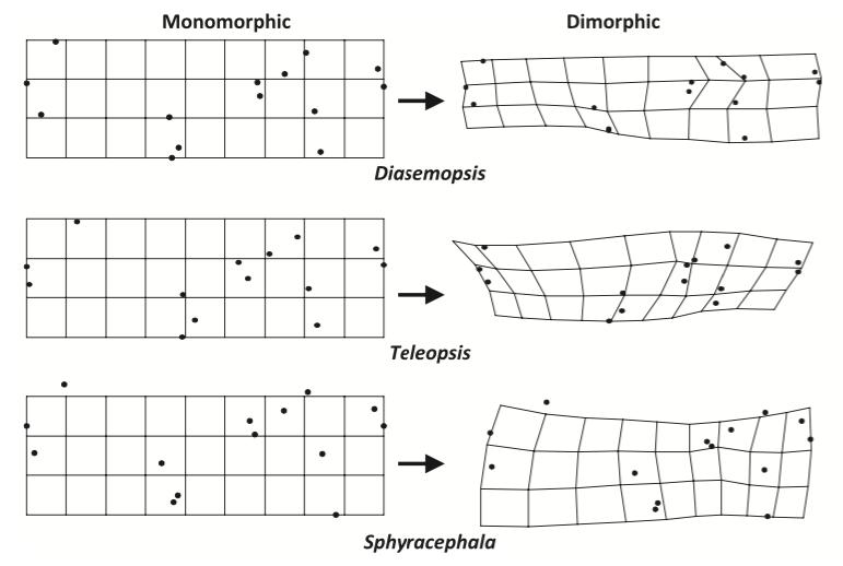 Figure 2 :