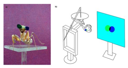 Cinéma 3D à insecte pour étudier la vision stéréoscopique chez la mante-religieuse (Source : Nityananda, 2015)