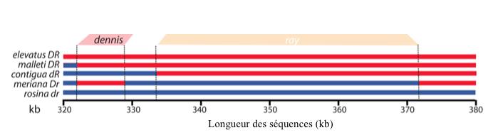Figure 3 : Régions du génomes associées aux phénotypes Dennis et Ray - D/d : Dennis exprimé/absent - R/r : Ray exprimé/absent (Source : Wallbank et al., 2016)