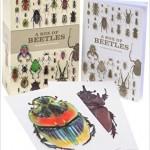 Box beetles