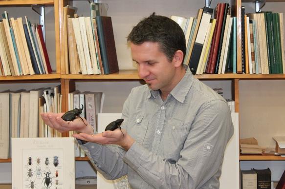 Patrice BOUCHARD et un couple de coléoptères guyanais Megasoma actaeon (Source : P. BOUCHARD)