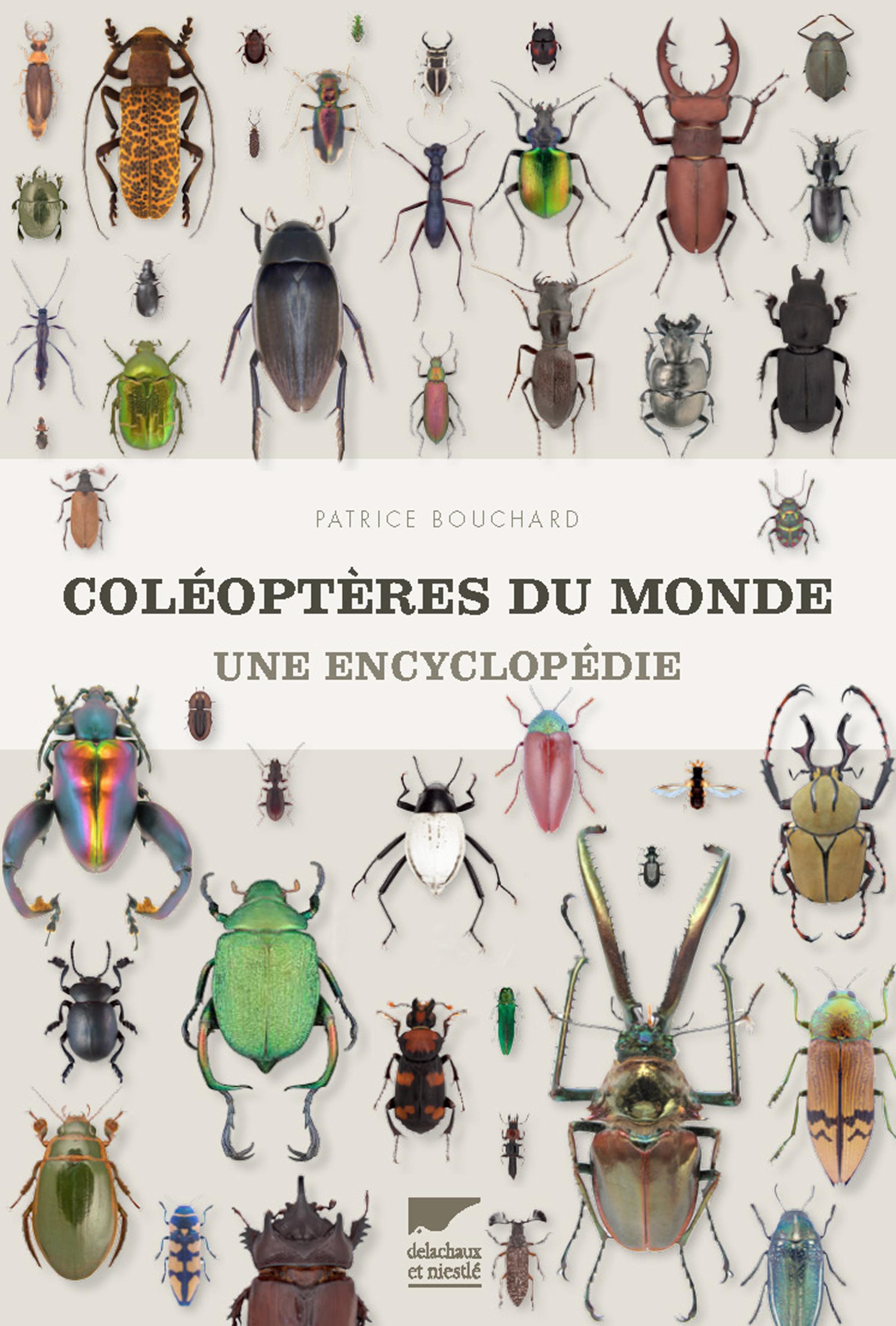 Coléoptères du monde : une encyclopédie – Interview de Patrice Bouchard