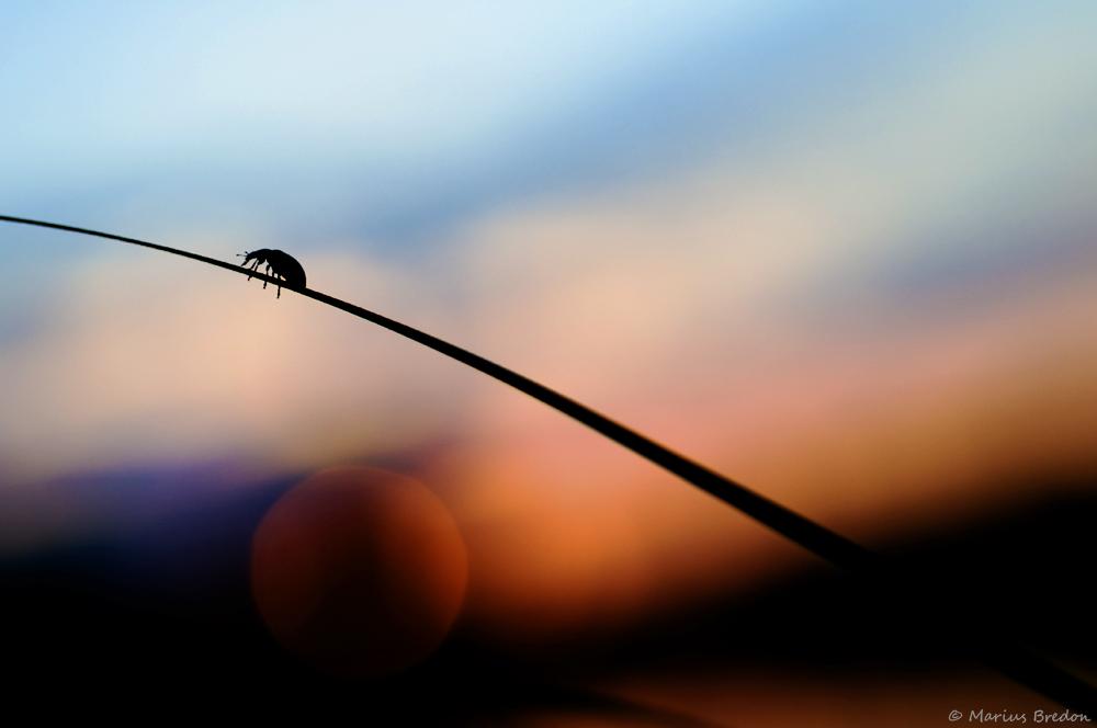 Coléoptère (Source : Marius BREDON)