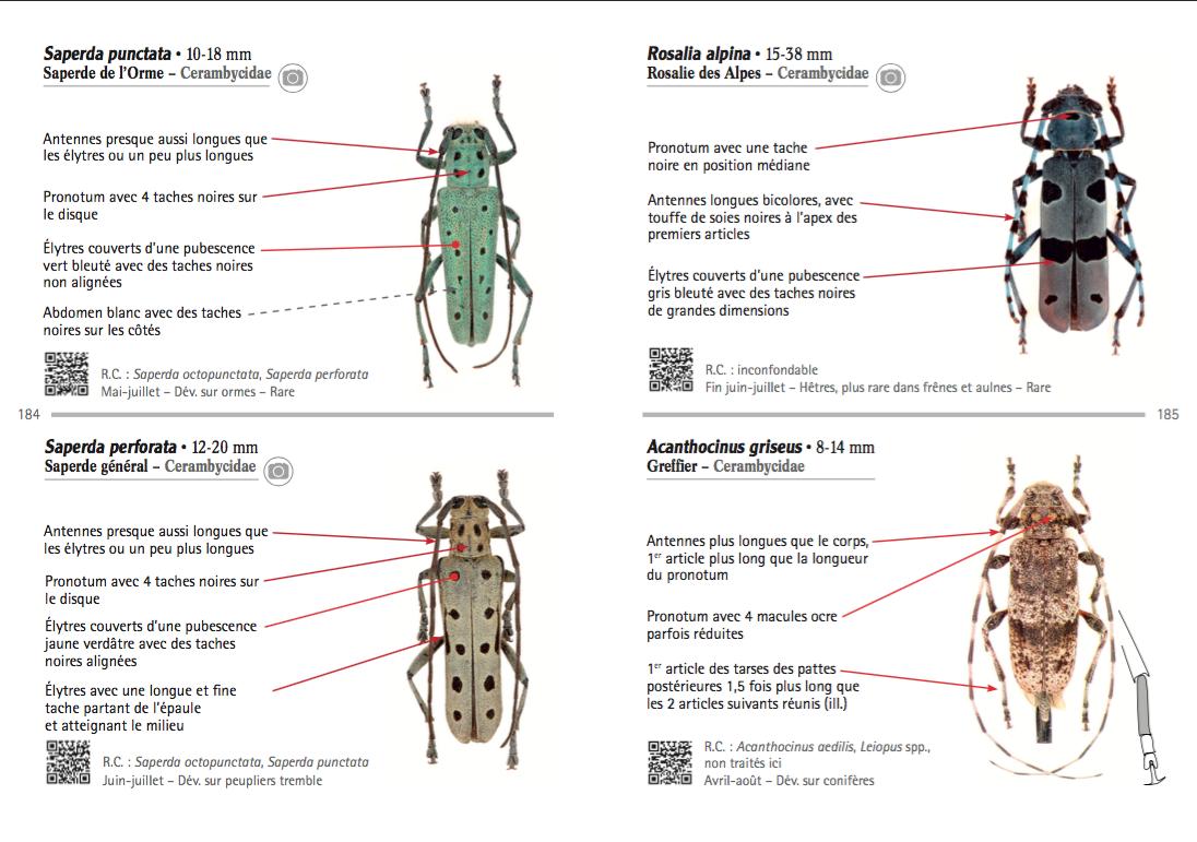 Exemple de présentation d'espèces : famille, diagnose, écologie, photo en focus stacking et QRcodes (Sources : B. Meriguet et P. Zagatti, Delachaux - 2016)
