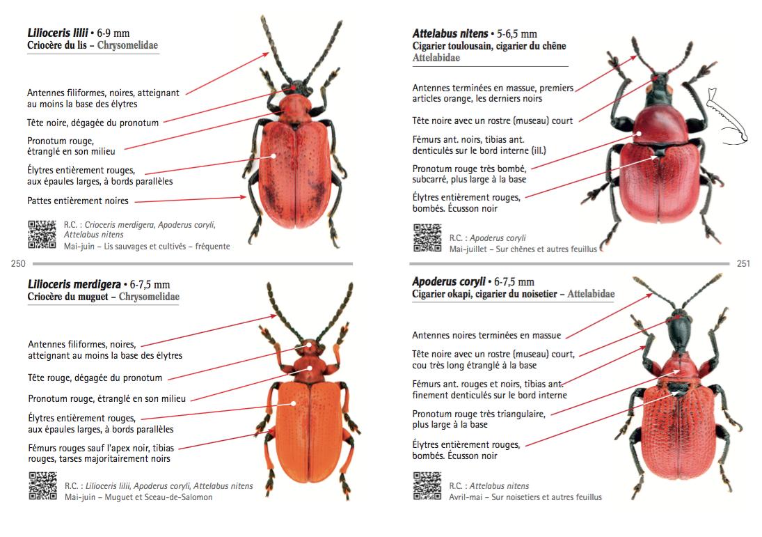 Exemple de présentation d'espèces : famille, diagnose, écologie, photo en focus stacking et QRcodes (Source : B. Meriguet et P. Zagatti, Delachaux&Niestlé - 2016)