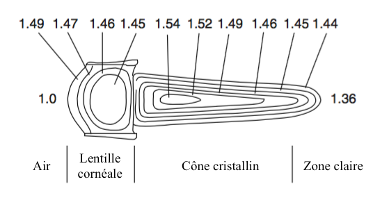 Figure 2 : lentille cylindrique d'un oeil composé de type superposition avec un indice de réfraction variable dans la cornée et le cône cristallin