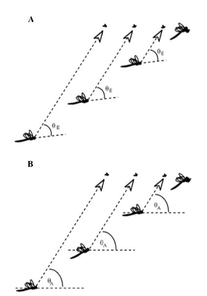 Figure : Hypothèses alternatives pour la perception au vol d'une proie par une libellule - A : maintien d'un angle constant par rapport à l'axe longitudinal de l'insecte () - B : maintien d'un angle constant par rapport à l'axe de l'horizon (angle absolu) ()