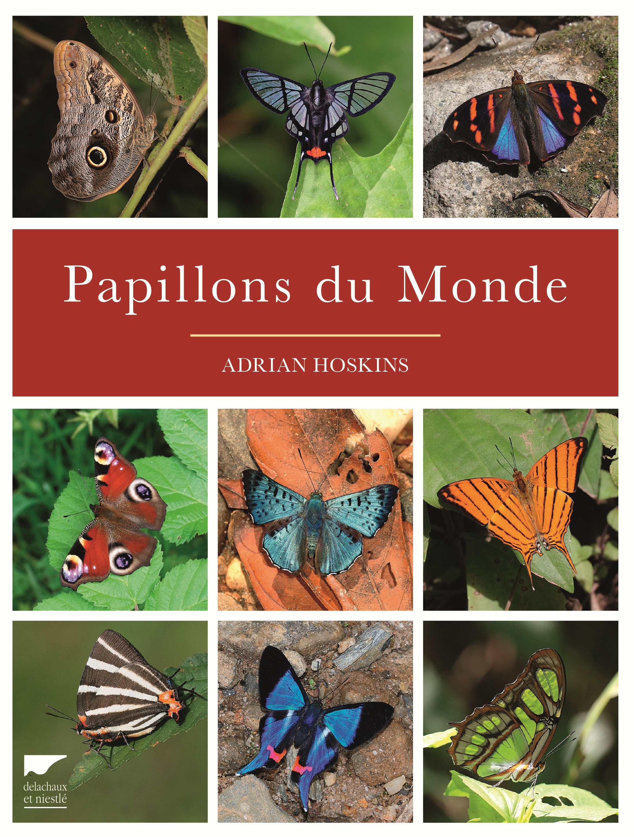 Cover page : World butterfly - Adrian Hoskins (Delachaux and Niestlé - June 2016)