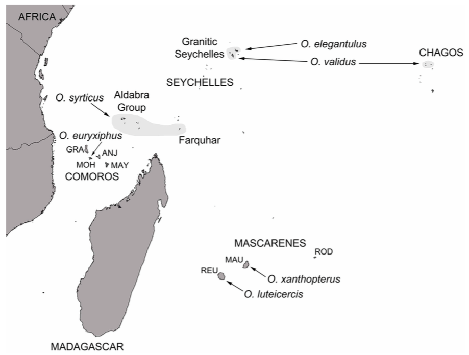 Carte de distribution des différentes espèces de Ornebius dans les iles de l'Océan Indien (REU : Réunion - MAU : Maurice - ROD : Rodrigues - GRA : Grande Comore - MOH : Moheli - ANJ : Anjouan - MAY : Mayotte) (Source : Warren et al., 2016)