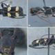 Une nouvelle espèce de Cerambycidae d'Afrique du sud dédiée à Nelson Mandela