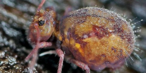 Collembola: small mysterious insects