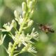 Disparition des insectes : causes et conséquences