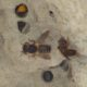 La quête du chalicodome des hangars : dans les pas de fabre