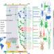 Histoire évolutive des phasmes et des phyllies