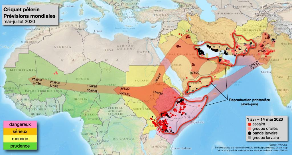 2020, l'invasion du Criquet pèlerin en Afrique de l'Est : récurrence d'un phénomène historique