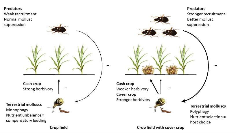 Ecologie nutritionnelle des herbivores
