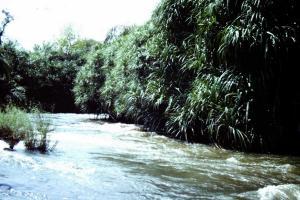 Rivière Sassandra (RCI)
