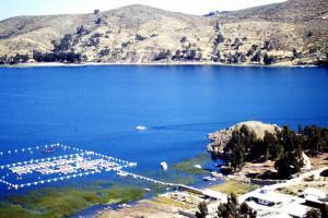 Elevage de Salmonidae - Lac Titicaca
