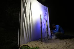 Collecte d'insectes de nuit au piège lumineux