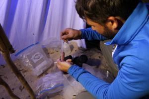 Rangement des insectes mis en tube
