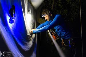 Moi capturant un insecte dans la canopée