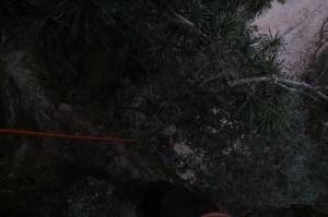 Installation du piège lumineux dans la canopée