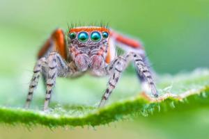 Araignée Salticidae - 20 clichés à main levée